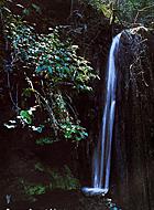Природа Афона